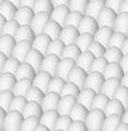 white egg background illustration