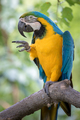 Funny Parrot Bird Pointing