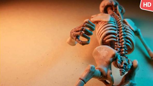 Download Human Skeleton 0182 nulled download