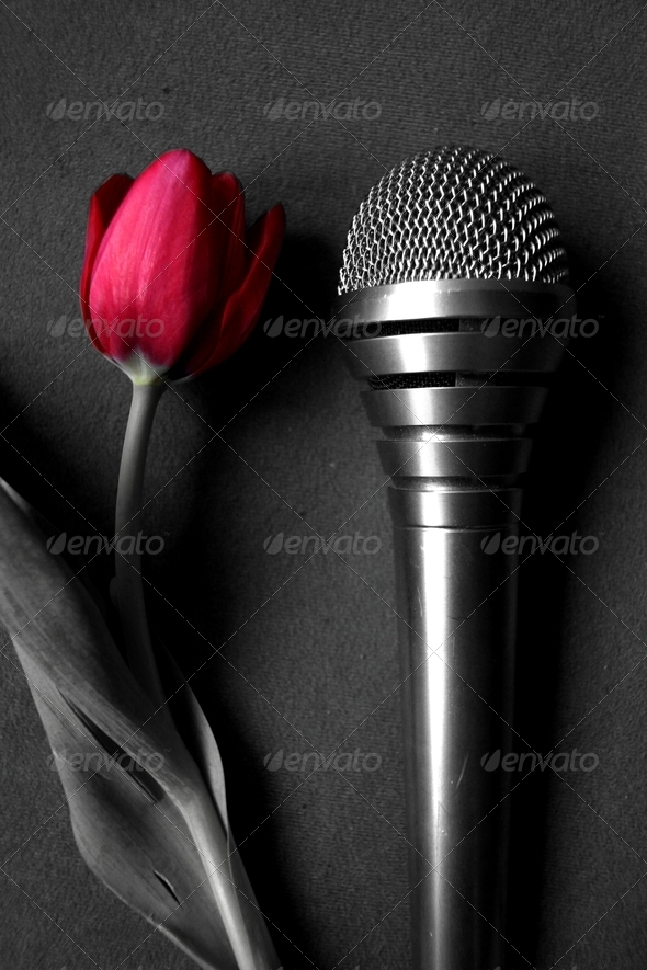 Tulip and Microphone - Stock Photo - Images