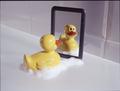 Plastic bath duck before a mirror