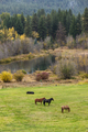 Horses grazing in a green field.