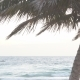 Palm Tree On Tropical Coast With Blue Sky And Calm Sea Tourism  Background