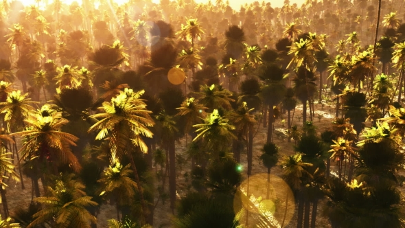 VideoHive Tropical Palm Forest At Sunset 18564140