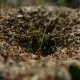 Ant Ants Insects On The Earth Movement Nature Works