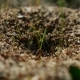 Ant Ants Insects On The Earth Movement Works Nature