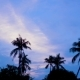 Tropical Sunrise With Palm Trees,