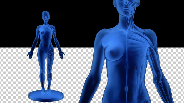 Download 3D Woman Outline Silhouette nulled download