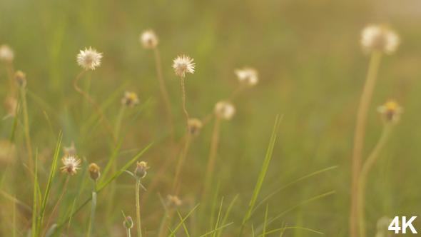VideoHive Grass 18662958
