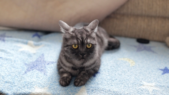 VideoHive Cute Black Smoke Cat 18668870