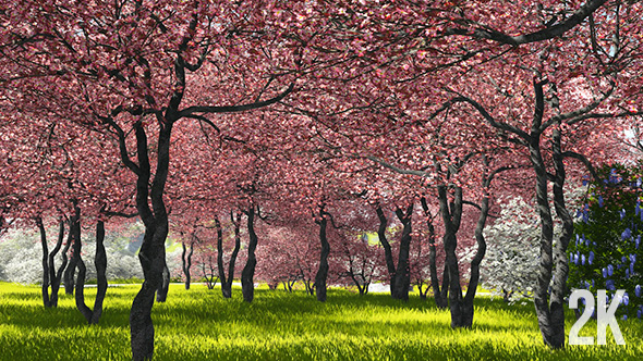 Download Sakura Garden nulled download