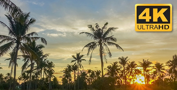 VideoHive Sunset with Tropical Palm Tree 18702851