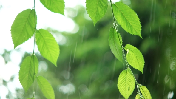 VideoHive Green Leaves In Rainy Weather 18710281