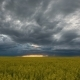 Stormy Clouds Over a Canola Field