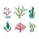 Underwater Seaweeds, Aqua Kelp, Ocean And Aquarium