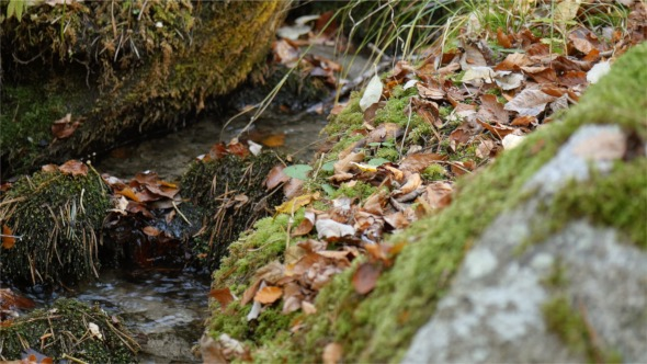 VideoHive Autumn Leaves and Water 18721907