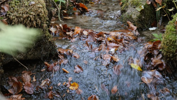 VideoHive Clean Water From Forest 18722059