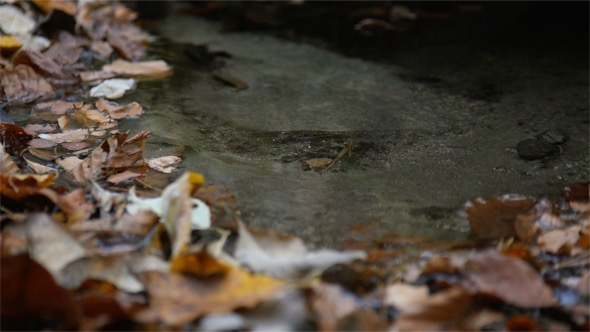 VideoHive Leaves and Water 18722148