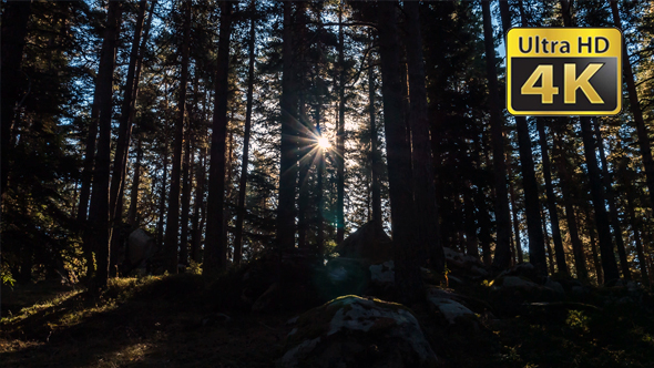 VideoHive Sunset and Trees 18722885