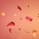 Falling Autumn Leaves (3-pack)