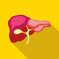 Ovary in pelvis icon, flat style
