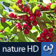 Nature HD | Red Berries II - VideoHive Item for Sale