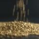 Pours Buckwheat Grain.