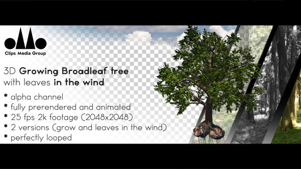 Download 3D Photorealistic Growing Broadleaf Tree With Leaves In The Wind nulled download