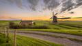Dutch Wooden windmill in grassy dairy landscape