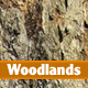 Woodlands - GraphicRiver Item for Sale