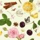 Download Vector Vector Aromatic Tea Pattern