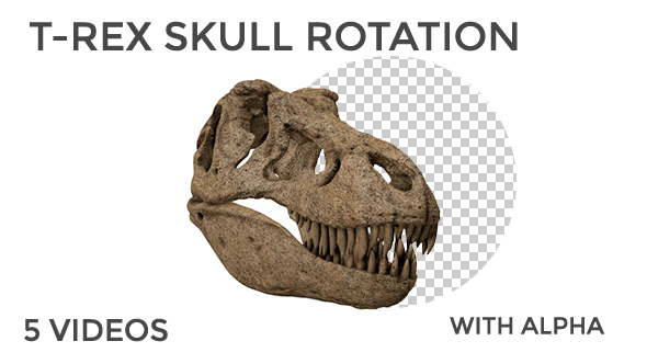 Download T-Rex Skull Rotation nulled download