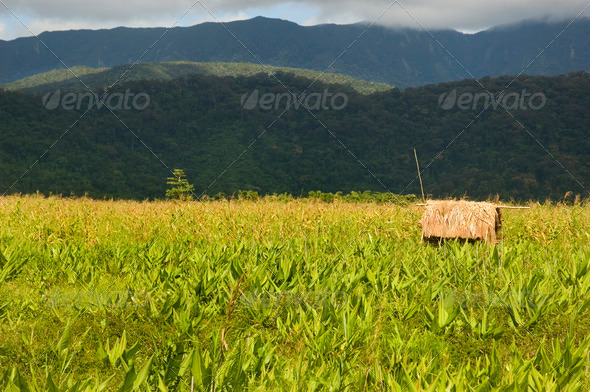 Dumagat Hut - Stock Photo - Images