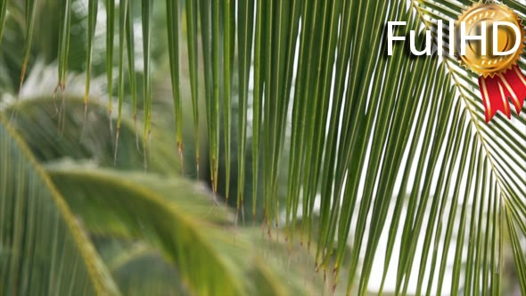 VideoHive Palm Leaves Swaying in the Wind 18883097