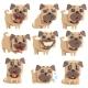 Pug with Collar Set Emoji