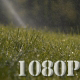 Green Grass Sprinkler Dew
