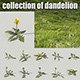 Dandelion Collection R-Assets