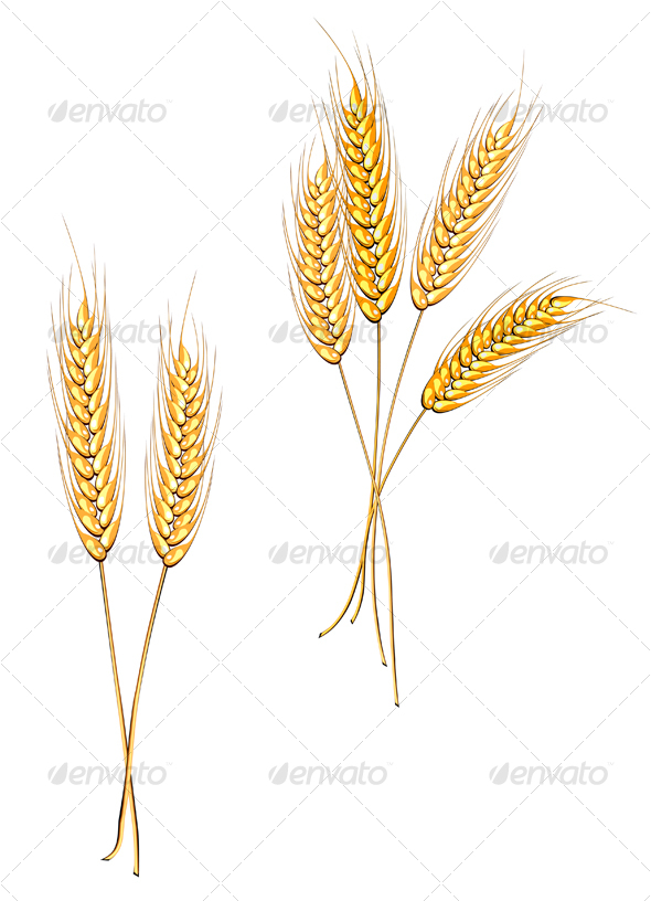 GraphicRiver Ripe wheat isolated on white 72315