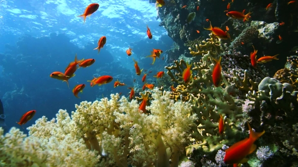 VideoHive Coral and Fish in the Red Sea Egypt 18941572