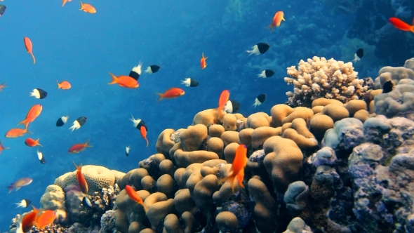 VideoHive Coral and Fish in the Red Sea 18941611