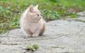domestic orange cat