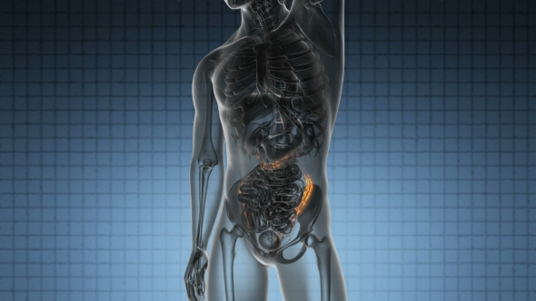 Download Anatomy Scan of Human Colon nulled download