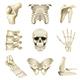 Human Bones Icons Vector Set