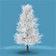 Snow Tree
