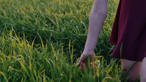 VideoHive Legs of Woman Walking in Field Touching Long Grass with Her Hand Young Girl in Dark-red Dress 18977378