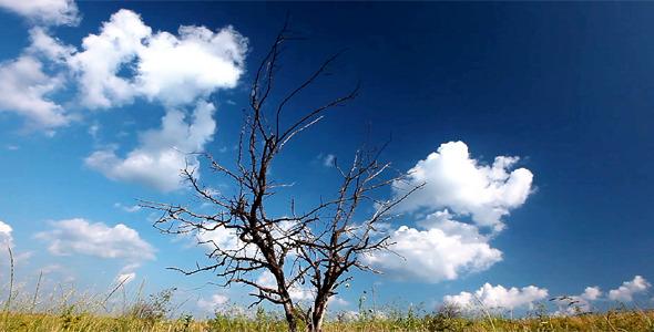 Be Single Tree