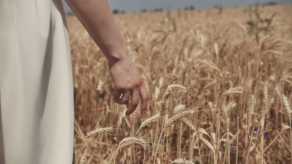 VideoHive Woman's Hand Walking Through Wheat Field Good Harvest Concept 19002902