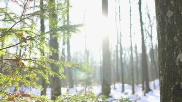 VideoHive Winter Sun Shining Through Trees Dolly 19014373