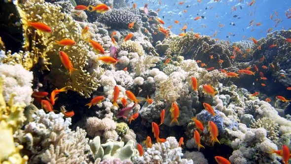 VideoHive Coral and Fish in the Red Sea 19027735