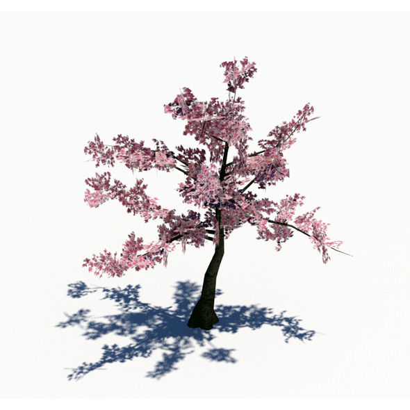 3DOcean Lowpoly Cherry Tree 1871402